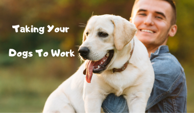 aking Your Dogs To Work