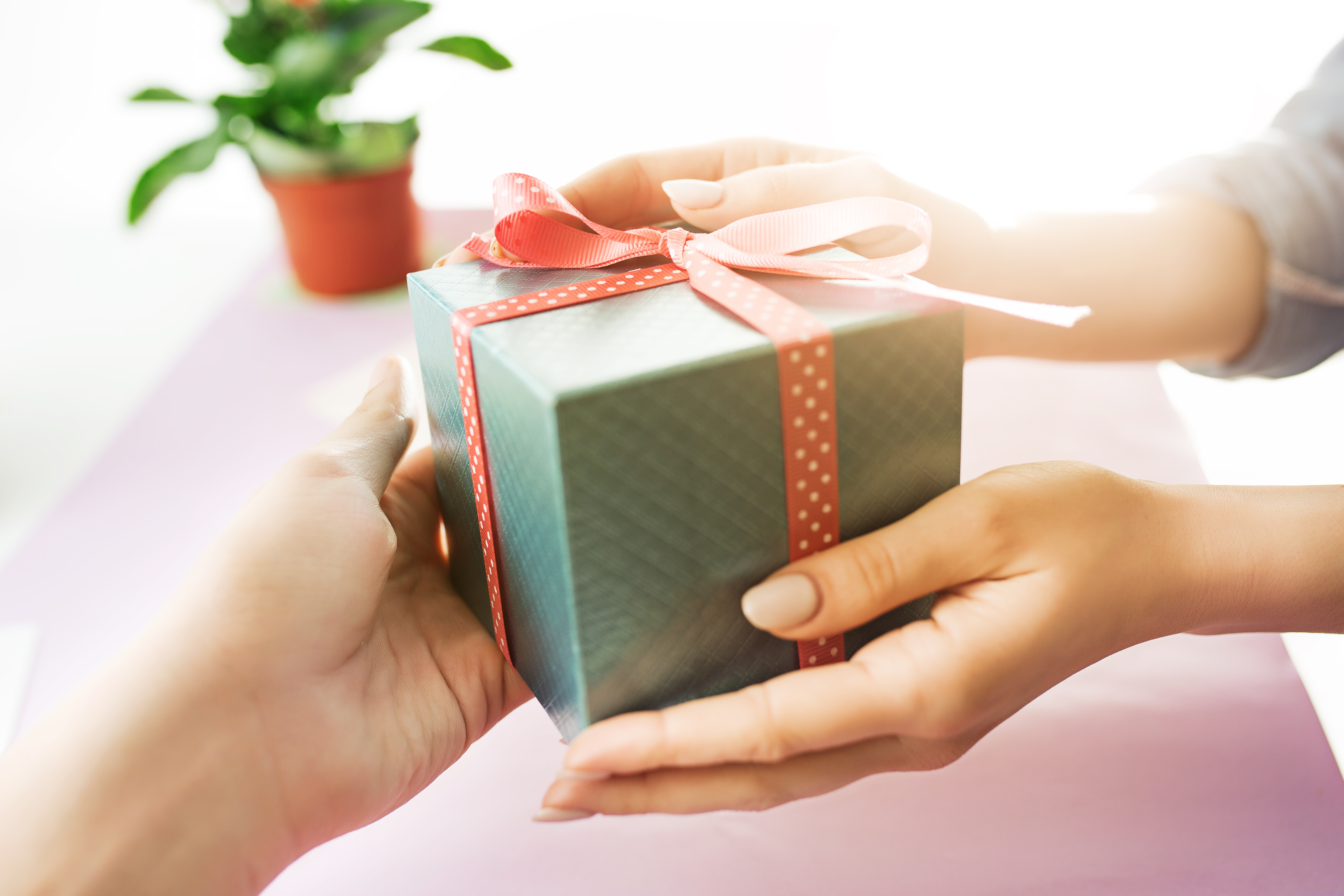 Close-up of female hands holding a present. The trendy pink desk.